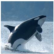 levignaud01-ronde-foto-orka